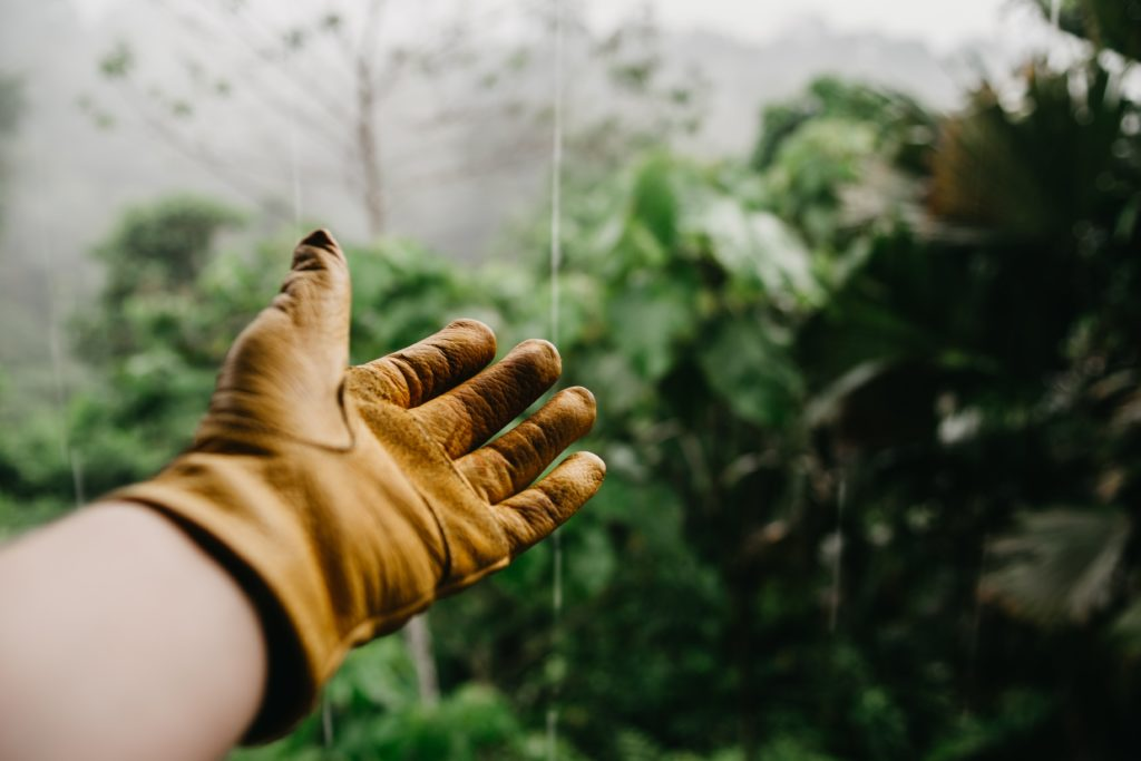 A hand reaching out with a yellow gardening glove on it, as if to show off the green plants in the background of the photo